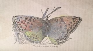 William Seaton and the Butterfly with a History of that Beautiful Insect